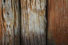 Wood texture. Old log wood a part of the trunk or a large branch of a tree were lined to make the wall royalty free stock photography