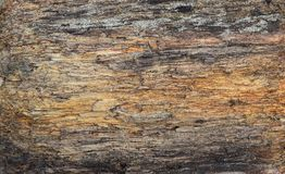 Wood texture of old rotten thick barrel. royalty free stock photo