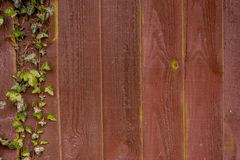 Wood texture. Wood panel background texture with a touch of ivy to the left royalty free stock images