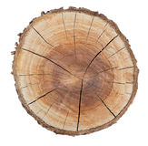 Wood texture ring Royalty Free Stock Image