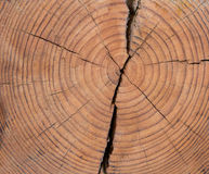 Wood texture rings Stock Image