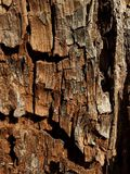 Wood texture 1. Rotted wood texture Royalty Free Stock Photos