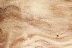 Wood texture rough and burr for background Royalty Free Stock Photography