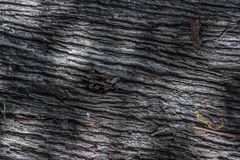Wood texture and shadows. A photo of wood with shadows Royalty Free Stock Photos