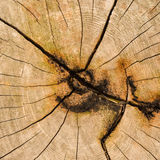 Wood texture. Showing natural grain of tree Royalty Free Stock Photography