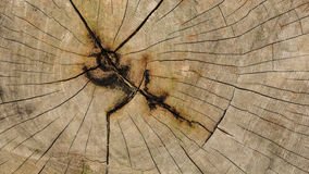 Wood texture. Showing natural grain of tree Royalty Free Stock Photo