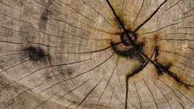 Wood texture. Showing natural grain of tree Royalty Free Stock Image
