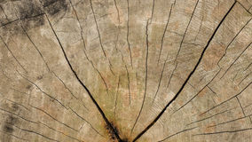 Wood texture. Showing natural grain of tree Royalty Free Stock Photos