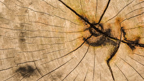 Wood texture. Showing natural grain of tree Stock Image