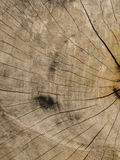 Wood texture. Showing natural grain of tree Royalty Free Stock Images