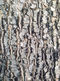 Wood texture skin stock images
