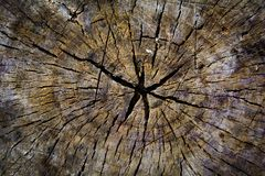 Old wood tree rings texture Royalty Free Stock Photos