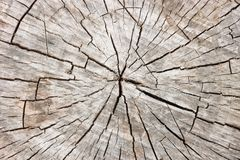 Wood texture stump. cross section Stock Photography