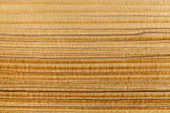 The wood texture of a chopped pine log. Wood texture in the sunlight closeup royalty free stock images