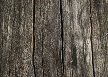 Wood texture. Surface of wood plank background. Wood background. Wood texture. Surface of wood plank background. Wood background Royalty Free Stock Photos