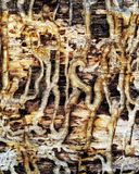 Wood texture teredo. Teredo wood texture brown gold Stock Images