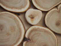 Wood texture. Texture of a tree for background and texture Stock Photography