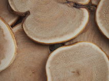 Wood texture. Texture of a tree for background and texture Royalty Free Stock Image