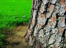 Wood Texture Tree Background Green Grass Royalty Free Stock Image