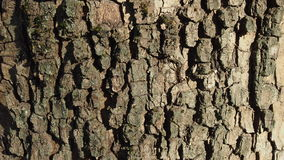 Wood texture. Tree bark for backgrounds and textures Stock Photography