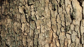 Wood texture. Tree bark for backgrounds and textures Stock Photo