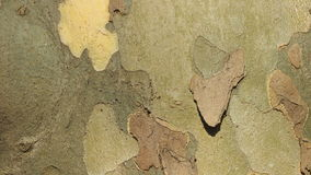 Wood texture. Tree bark for backgrounds and textures Stock Images