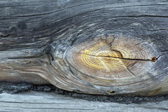 Wood texture. Tree. incision. large fragment. texture of the wood. background. termites Stock Images