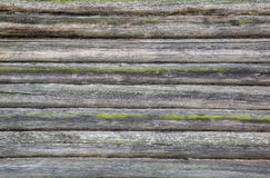 Wood texture. Tree. incision. large fragment. texture of the wood. background. termites stock photo