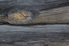 Wood texture. Tree. incision. large fragment. texture of the wood. background. termites Stock Image