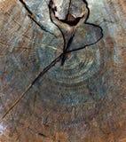 Wood texture of tree stump royalty free stock photo