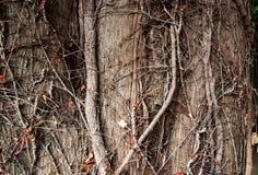 Wood texture tree trunk Royalty Free Stock Photos