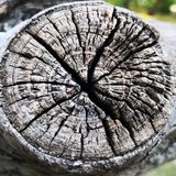 Wood texture on a tree trunk cut royalty free stock photos