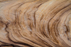 Wood texture. Tree year rings Stock Image