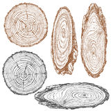 Wood texture of trunk tree sketch. Round and oval cross section of tree trunk. Wooden texture with tree rings.  Hand drawn sketch Stock Image