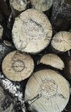 Wood texture of wavy ring pattern from a slice of tree. Wooden stump.Aspen. Birch. Coniferous. Wood texture of wavy ring pattern from a slice of tree. Aspen royalty free stock images