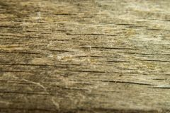 Wood texture, wood background and foundation Royalty Free Stock Image