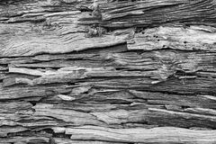 Wood texture or wood background for interior exterior decoration and industrial construction concept design. Wood motifs that occurs natural Royalty Free Stock Images