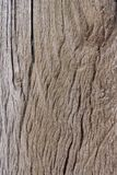 Wooden texture background. Wood texture, wood background, wood Stock Photos