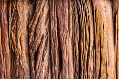 Wood texture, wood surface. background old panels.  Stock Photography
