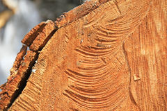 Wood texture. Woodcut background. High resolution photography Royalty Free Stock Image