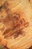 Wood texture. Royalty Free Stock Photography
