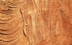 Wood texture. Woodcut background. High resolution photography Stock Photography
