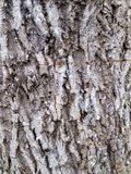 Old tree wood texture Royalty Free Stock Photos