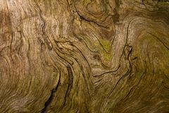 Wood Texture. Wooden texture of a very old tree root Royalty Free Stock Photos