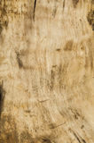 Wood texture yellow abstract old royalty free stock photo