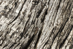 Wood textured Royalty Free Stock Photo