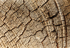Wood textured background. Close-up full frame dark wood textured background Royalty Free Stock Photos
