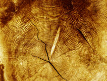 Wood textured background. An old wood textured background Royalty Free Stock Photo