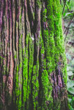 Wood textured with green moss Royalty Free Stock Photos