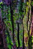 Wood textured with green moss Stock Photo